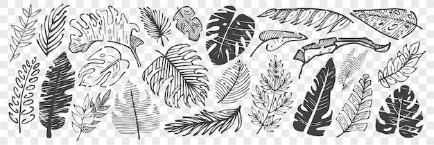 Jeu de doodle de feuilles dessinées à la main