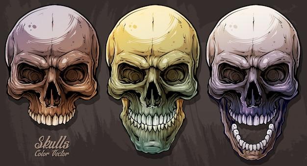 Jeu de graphiques détaillés de crânes humains colorés