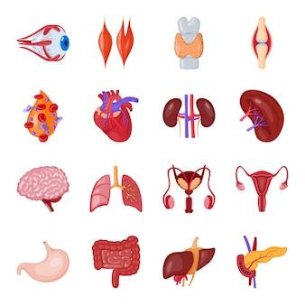 Jeu d'icônes de dessin animé d'organe humain