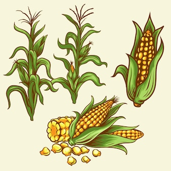 Jeu d'icônes de nourriture et de boisson de plantes de maïs
