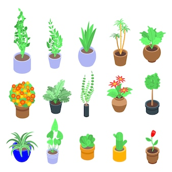 Jeu d'icônes de plantes d'intérieur, style isométrique