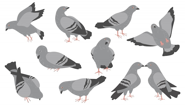 Jeu d'icônes plat dessin animé pigeons