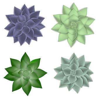 Jeu d'icônes succulentes, style réaliste
