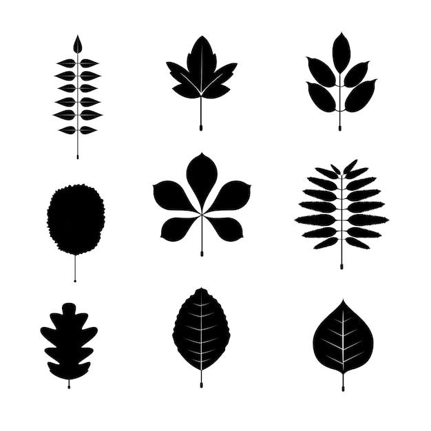 Jeu d'icônes et de symboles de feuille noir et blanc. illustration vectorielle