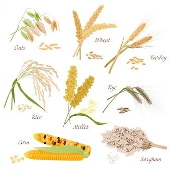 Jeu d'icônes vectorielles en plantes céréalières