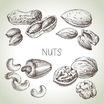 Jeu de noix de croquis dessinés à la main. illustration de la nourriture écologique