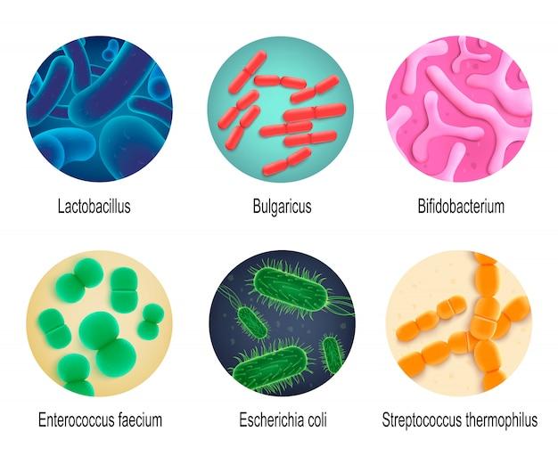 Jeu de vecteur réaliste de bactéries humaines symbiotiques