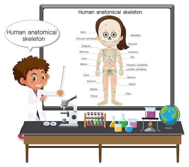 Jeune docteur expliquant le squelette anatomique humain