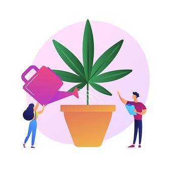 Jeune femme arrosage plante de chanvre, plante d'intérieur interdite. culture de marijuana, cannabis médical, horticulture illégale. fille de plus en plus de mauvaises herbes.