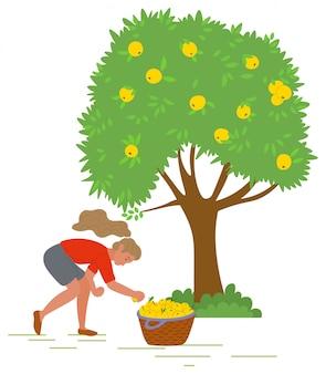 Jeune fille, cueillette des pommes jaunes vector image