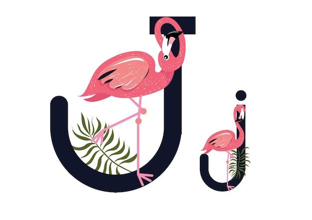 Jj flamingos