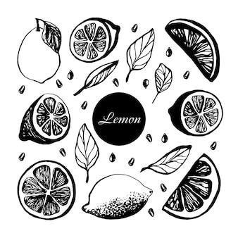 Joli ensemble dessiné à la main avec des tranches de citron avec des feuilles et des graines pour le menu ou la recette