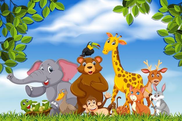 Joli groupe d'animaux dans la nature
