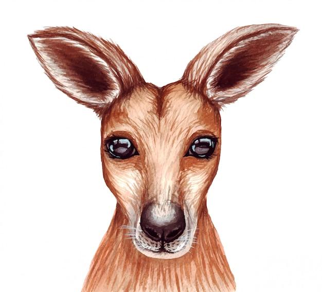 Jolie illustration aquarelle mignonne de visage de kangourou.