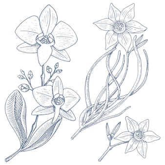 Jonquille et orchidée avec des feuilles et des bourgeons. fleurs de mariage dans le jardin ou plante de printemps.