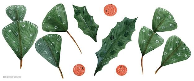 Joyeux noël a tracé des plantes aquarelles. cèdre et houx