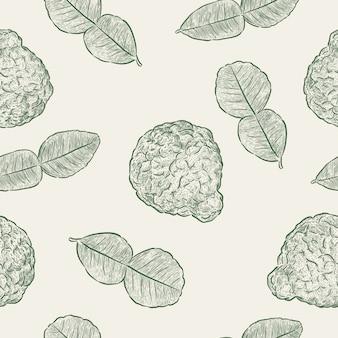 Kaffir lime, modèle sans couture. main dessiner un vecteur d'esquisse.