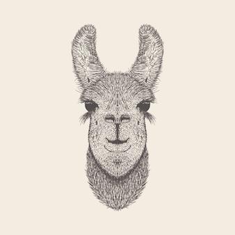 Kangaroo illustration, conception dessinée à la main.
