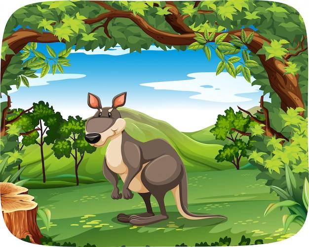 Kangourou dans la forêt