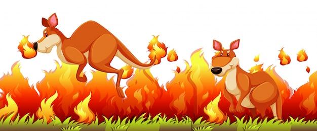 Kangourou échappe au feu de brousse