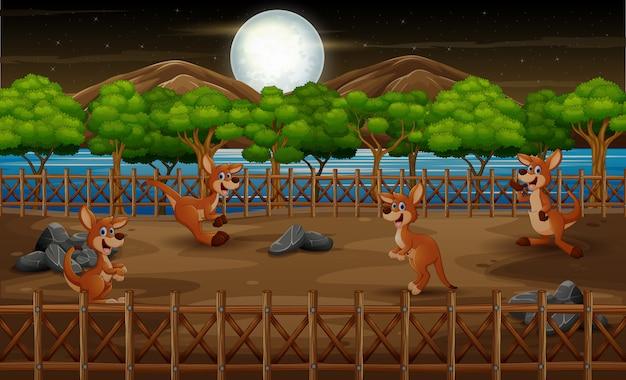 Kangourous dans la cage ouverte du zoo dans la nuit