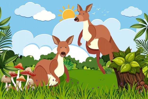 Kangourous dans la scène de la nature