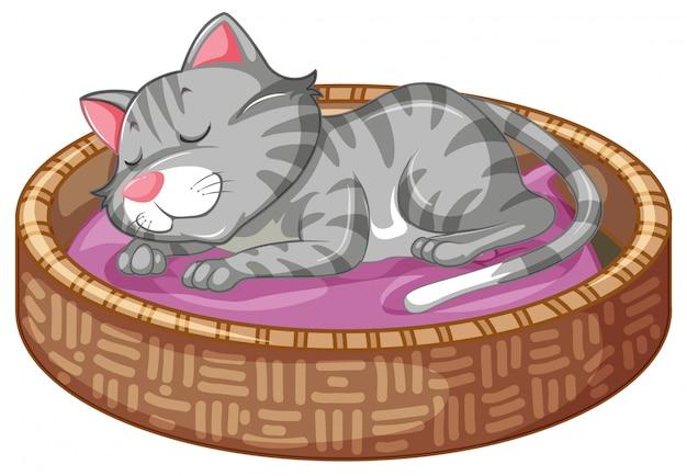Kitty mignon dans le panier