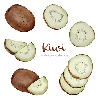 Kiwi dans une collection d'aquarelle, plein de fruits et coupé en morceaux