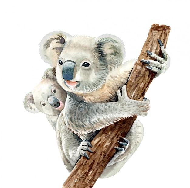 Koala aquarelle et bébé accrochent sur une branche.