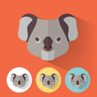 Koala conçoit collection