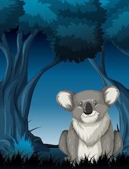 Koala en scène de nuit