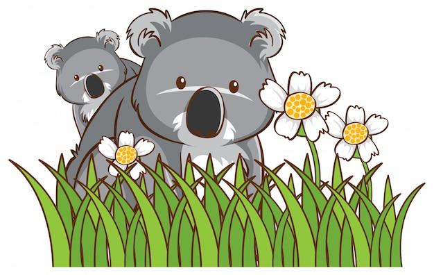 Koalas mignons dans le jardin