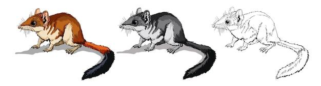Kovari ou souris des champs en couleur et en noir et blanc