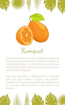 Kumquat exotiques fruits juteux vecteur affiche texte feuille