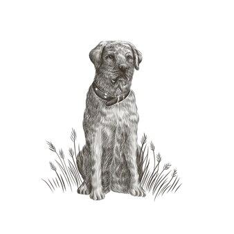 Labrador retriever closeup portrait de chien noir et blanc. illustration de l'animal de compagnie.