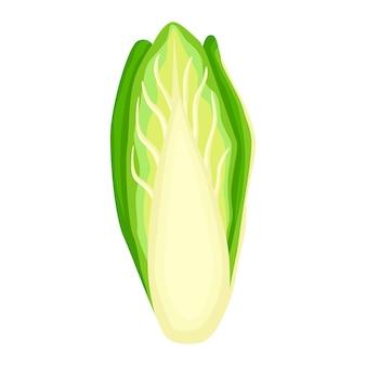 Laitue chicorée isolée sur fond blanc. salade gentille dans un style plat. symbole de l'agriculture pour n'importe quel usage.