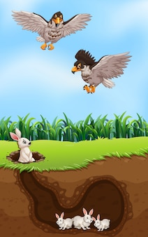 Un lapin de chasse aigle