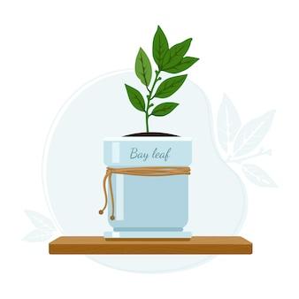 Laurus nobilis, laurier ou arbre à feuilles persistantes aromatique de laurier dans le cadre des herbes de rebord de fenêtre de cuisine.