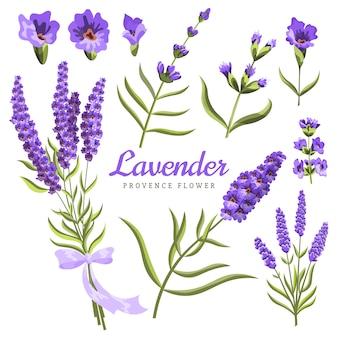 Lavande. ensemble de fleurs de lavande aquarelle et symboles sur le blanc, aquarelle.
