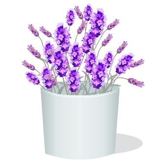 Lavender illustration background