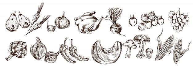 Légumes d'automne mis en ligne collection. artichauts, citrouilles, maïs, tomates, récoltes fraîches