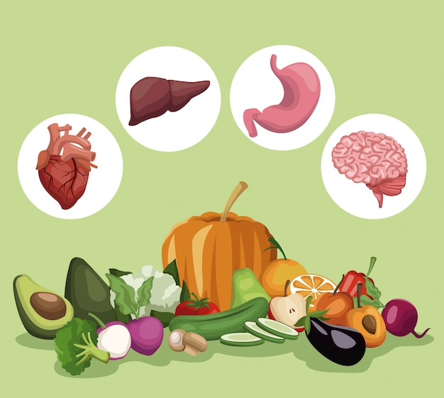 Légumes et fruits ensemble d'aliments sains et organes corps humain