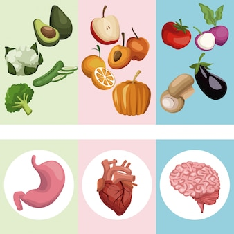 Légumes et fruits avec organes corps humain