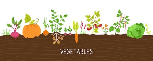 Légumes en jeu de dessin animé au sol