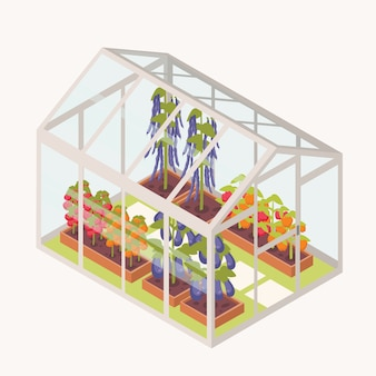 Légumes poussant dans des boîtes avec de la terre à l'intérieur d'une serre en verre.