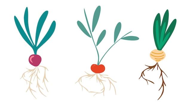 Légumes racines. ensemble de différents légumes tubéreux avec des sommets. radis, navets, oignon. ensemble de jardinage. parfait pour les affiches et l'impression de cartes postales de magasin de produits agricoles. plate illustration vectorielle.
