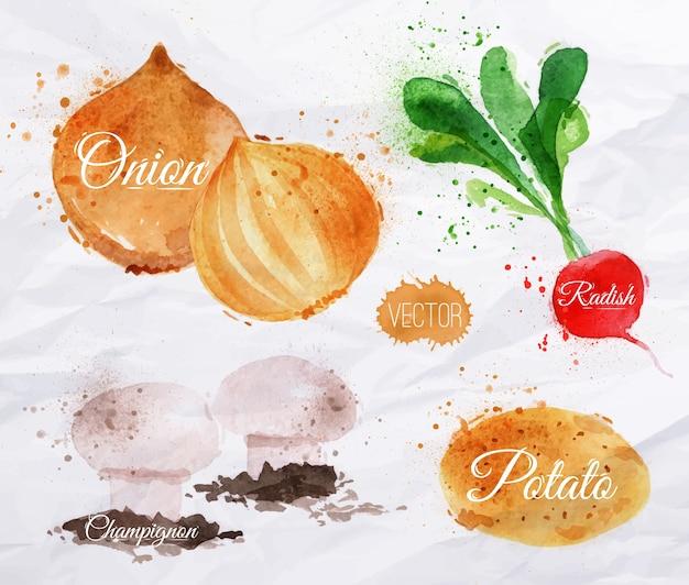 Légumes radis aquarelles