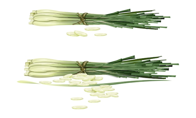 Lemon grass02
