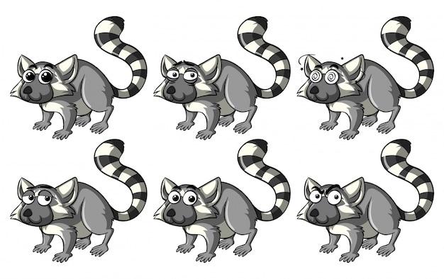 Lemur avec différentes émotions