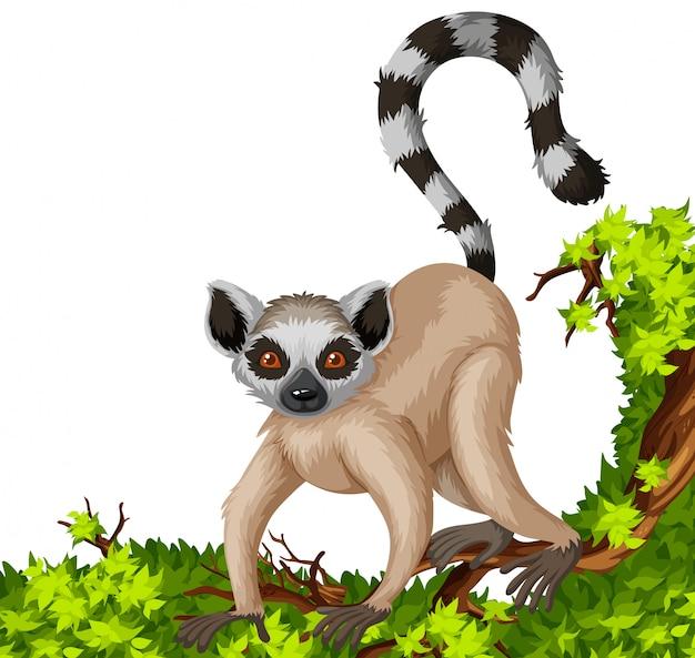 Lémurien sur la branche